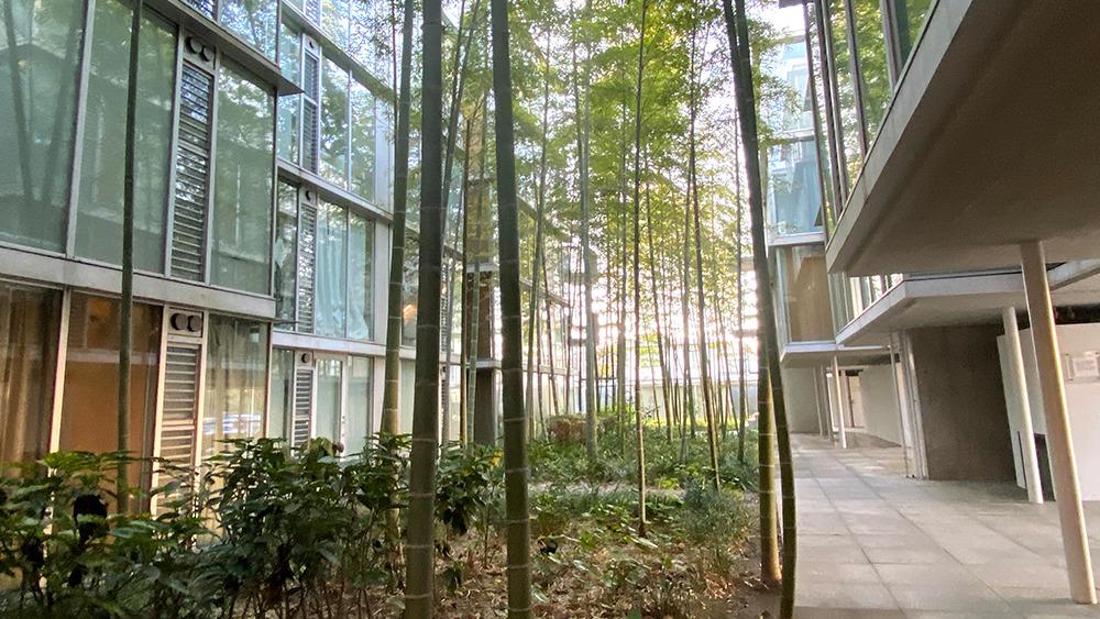 g-flat(ジーフラット)の玄関へと続く笹の葉がゆれる中庭アプローチ